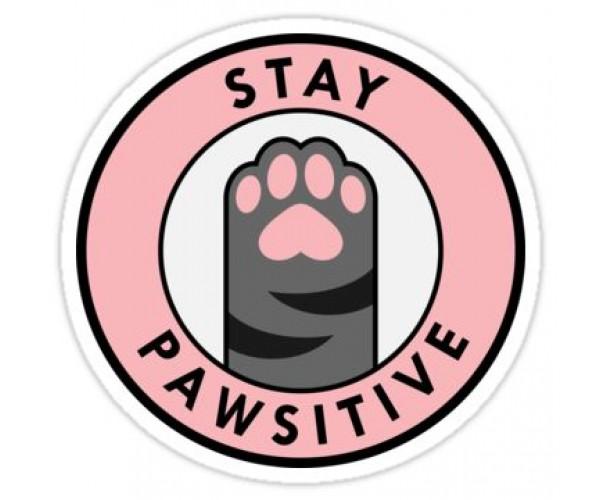 Стікер Stay Pawsitive